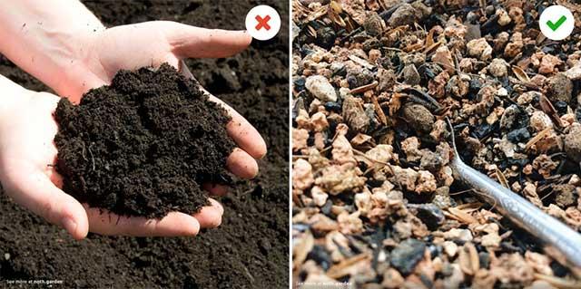 Cách trồng sen đá bằng lá cần chuẩn bị đất tốt
