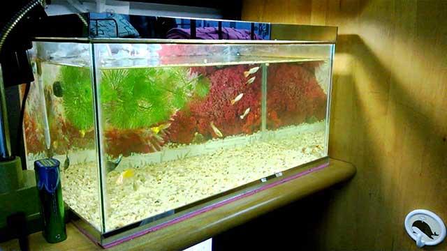 bể cá bảy màu