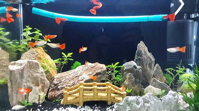 Trang trí đẹp cho bể cá thêm sinh động