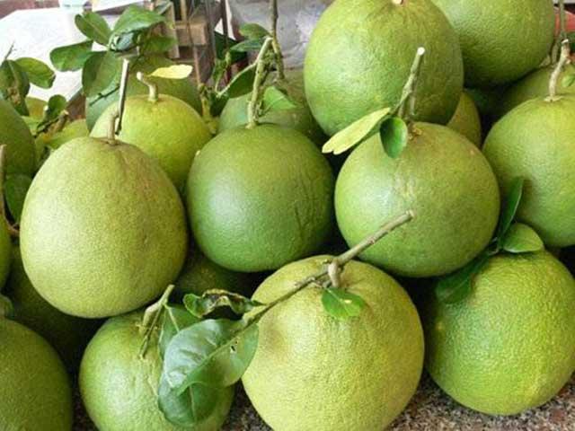 Quy trình trồng bưởi da xanh thu trái ngọt