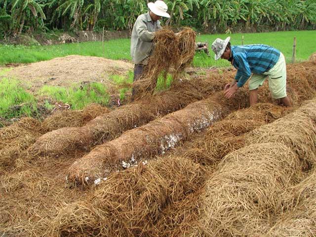 cách trồng nấm rơm trong nhà