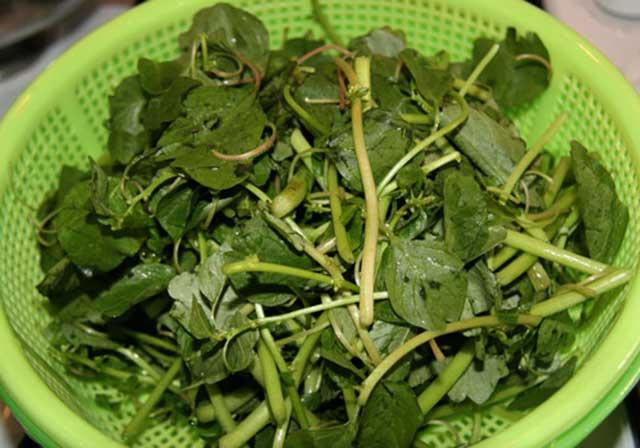 Trong rau dền có chứa hàm lượng săt và vitamin A - tốt cho cơ thể