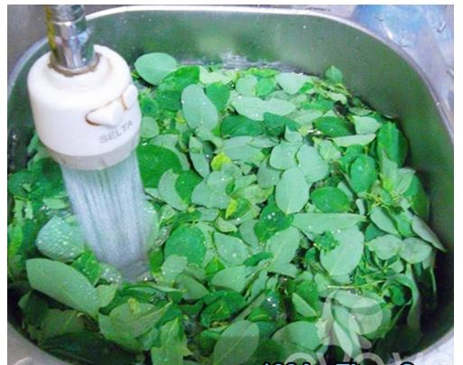 Rửa rau ngót nhiều lần bằng nước sạch