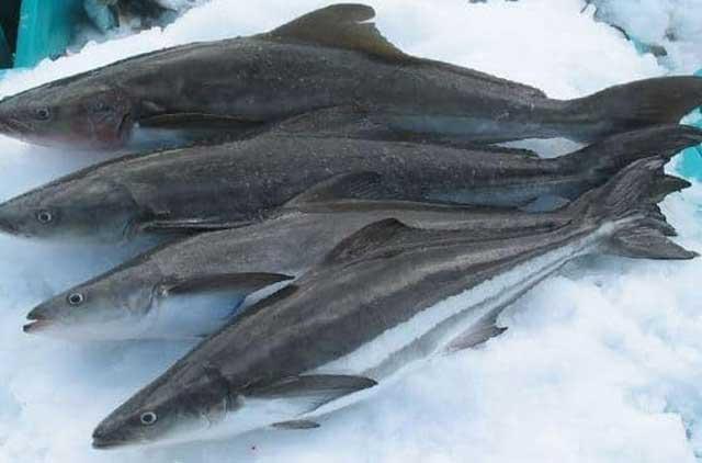 cách nấu lẩu cá bớp