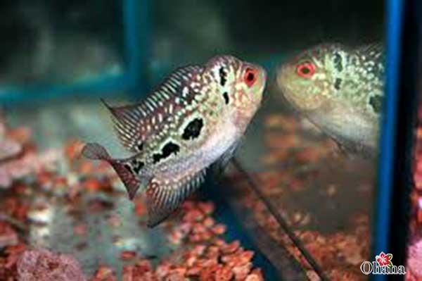 Thức ăn cho cá cần được đảm bảo