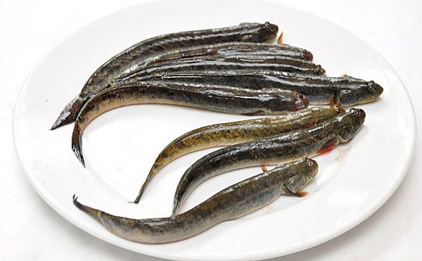 Cá kèo chứa nhiều giá trị dinh dưỡng