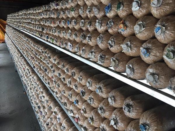 Tiến hành ủ nấm bào ngư