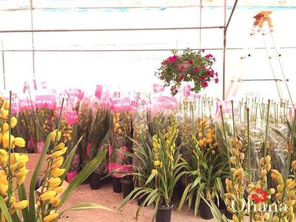 Vườn hoa địa lan đẹp
