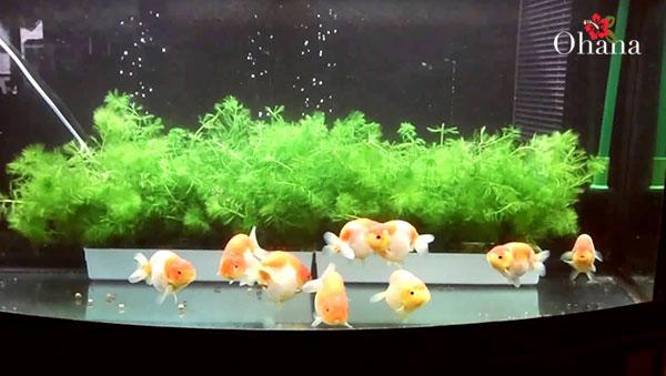 Chọn vị trí thích hợp đặt bể cá