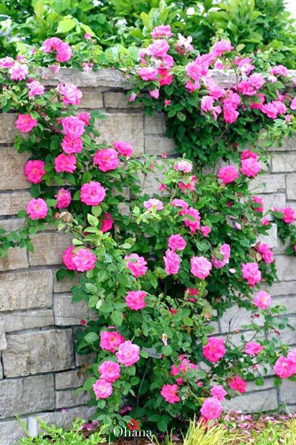 Cây phát triển cho hoa nở đẹp