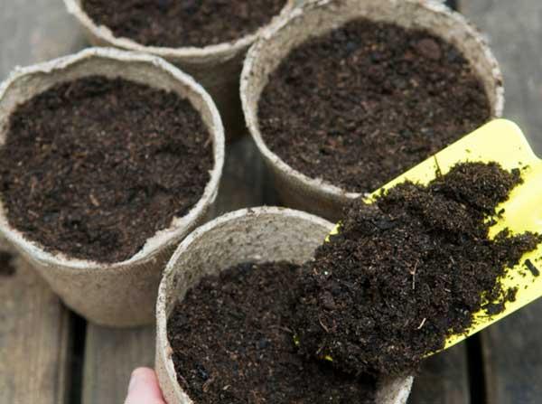 Chuẩn bị đất trồng hoa hướng dương