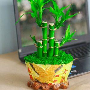 Hướng dẫn trồng cây Phát Lộc