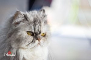 Hướng dẫn chăm sóc mèo batu