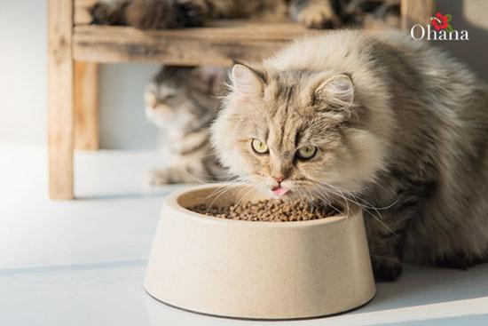 Kỹ thuật chăm sóc mèo batu