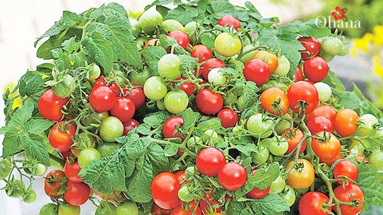 Lưu ý khi sử dụng cà chua làm đẹp